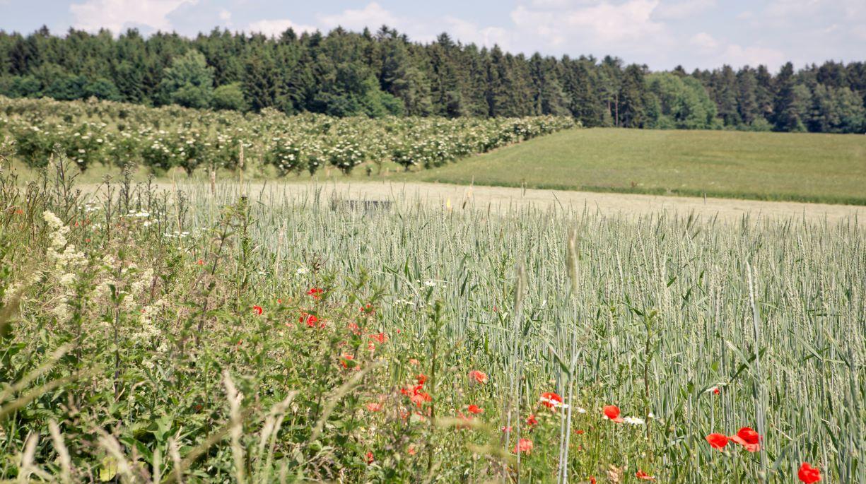 https://www.bioland.de/fileadmin/user_upload/Presse/Pressebilder/Feld_Biodiversitaet.jpg