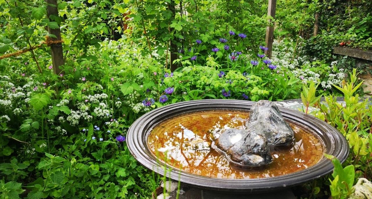 https://www.bioland.de/fileadmin/user_upload/Verbraucher/Blog/Artenvielfalt/Naturgarten/Naturgarten_Hero.jpg