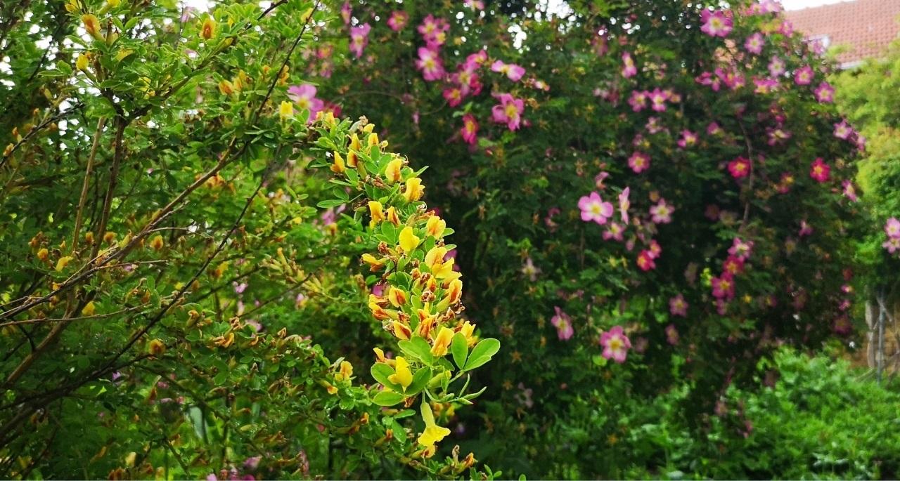 https://www.bioland.de/fileadmin/user_upload/Verbraucher/Blog/Artenvielfalt/Naturgarten/Pflanzentipps_Hero.jpg