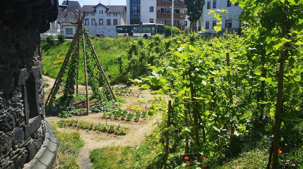 https://www.bioland.de/fileadmin/user_upload/Verbraucher/Blog/Klima_und_Umwelt/Gruene_Stadt/Essbare_Stadt/Wassergraben_Andernach_Essbare_Stadt_Hero_Bioland.jpg