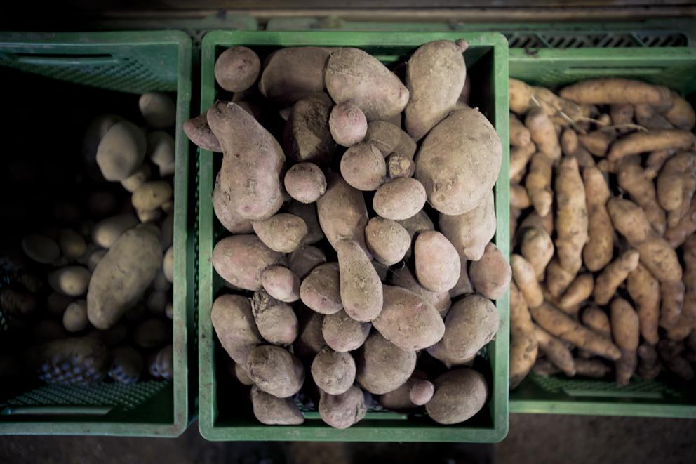 https://www.bioland.de/fileadmin/user_upload/Verbraucher/Blog/So_geht_Bio_/Kartoffel/Bioland_Gemuesebauer-431.jpg