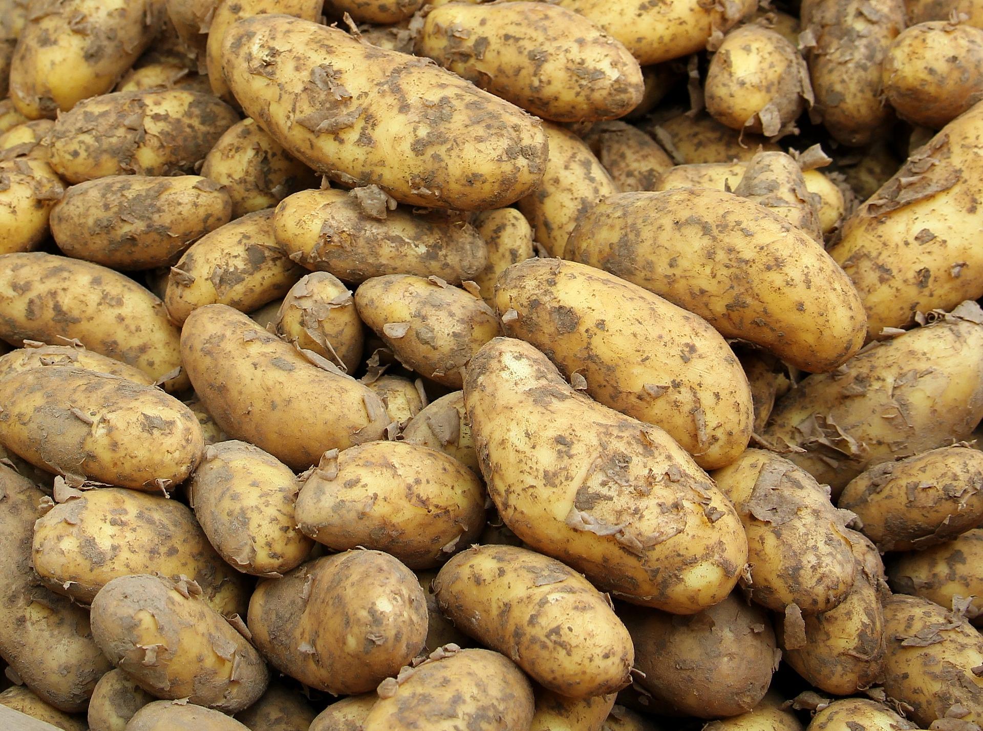 https://www.bioland.de/fileadmin/user_upload/Verbraucher/Blog/So_geht_Bio_/Kartoffel/Kartoffeln_Header_Ranking.jpg