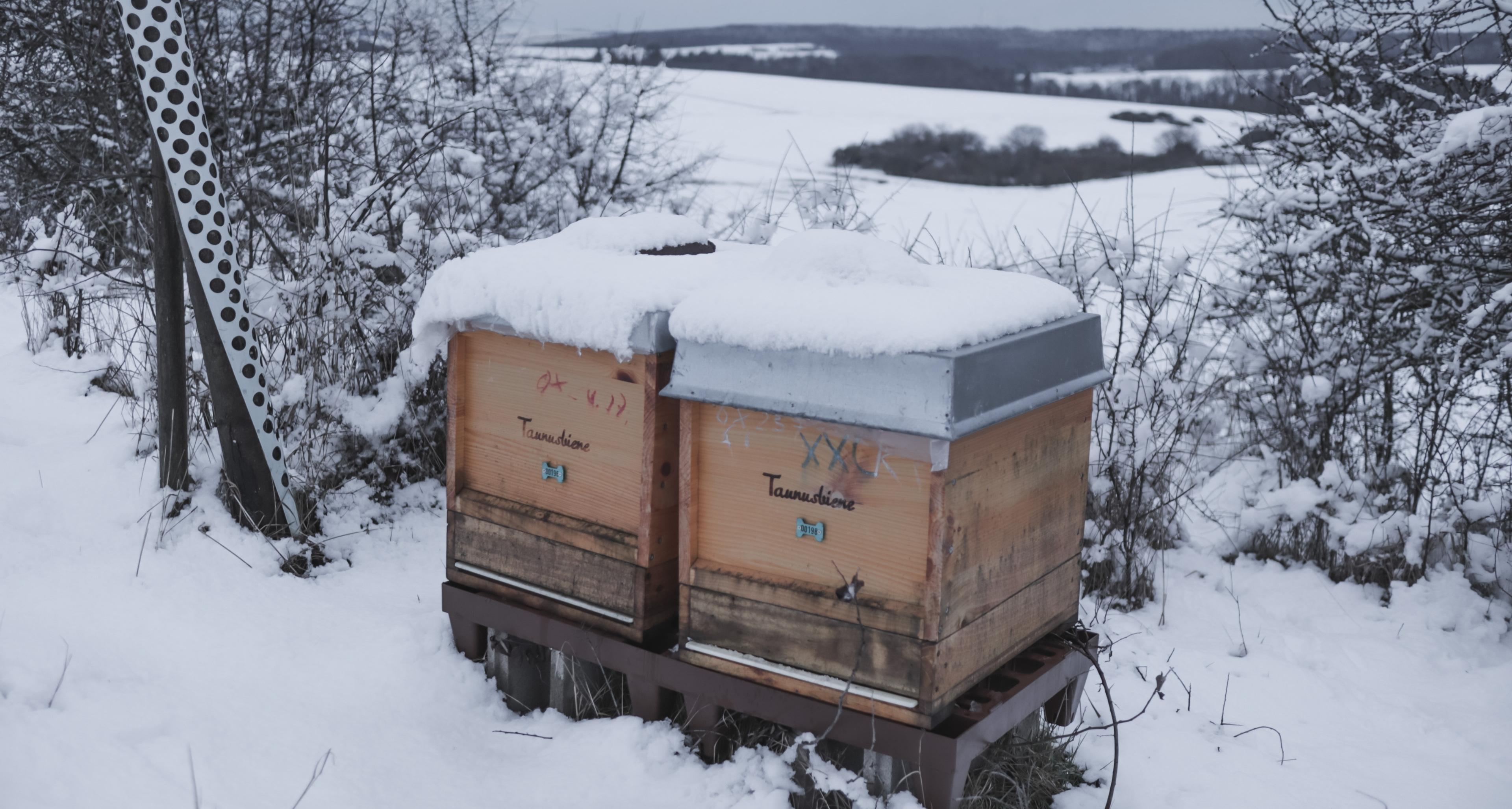 https://www.bioland.de/fileadmin/user_upload/Verbraucher/Blog/Tiere_und_Tierwohl/Bienen_im_Winter/Blog_Header.jpg