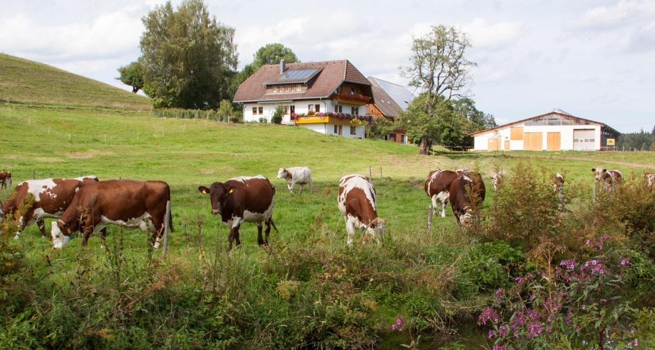 https://www.bioland.de/fileadmin/user_upload/Verbraucher/Blog/Tiere_und_Tierwohl/Kuh/Kaelbervermarktung_Hero.jpg
