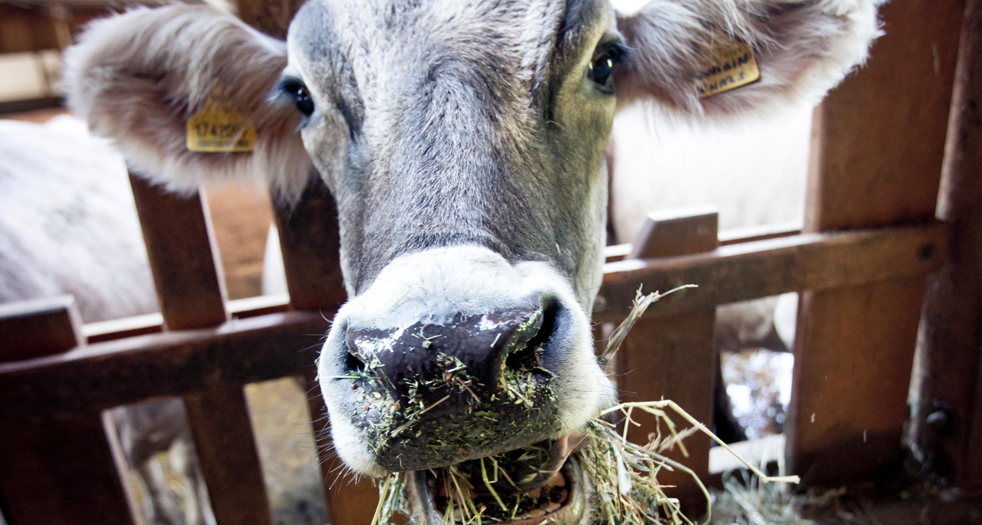 https://www.bioland.de/fileadmin/user_upload/Verbraucher/Blog/Tiere_und_Tierwohl/Mein_Patenkind_ist_eine_Kuh/Blog_Header_1_.jpg