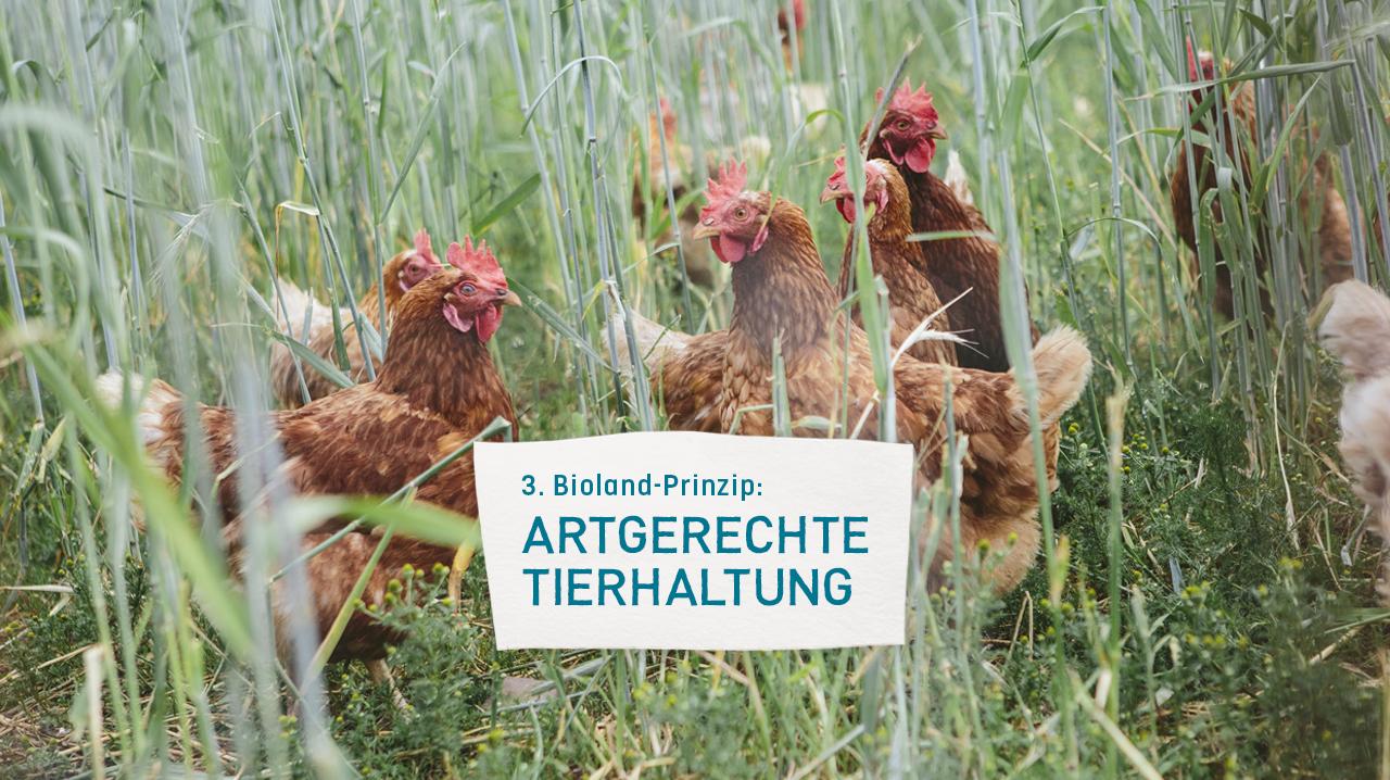 https://www.bioland.de/fileadmin/user_upload/Verbraucher/Blog/Tiere_und_Tierwohl/Tiere_artgerecht_halten_-_Ein_Leben_ueber_den_Nutzen_hinaus/3_Prinzip.jpg